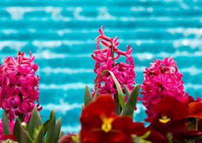 Blumen vor Wasserfall