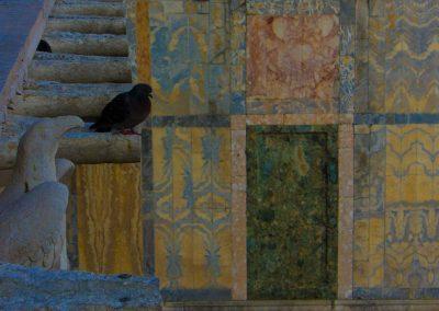 Taube vor bunter Wand Venedig