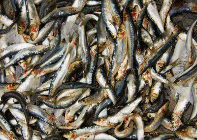 blutige Fische am Ufer Venedig